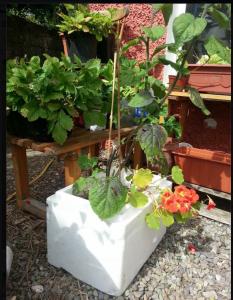 Maja's planter