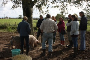 Getting to know the pigs